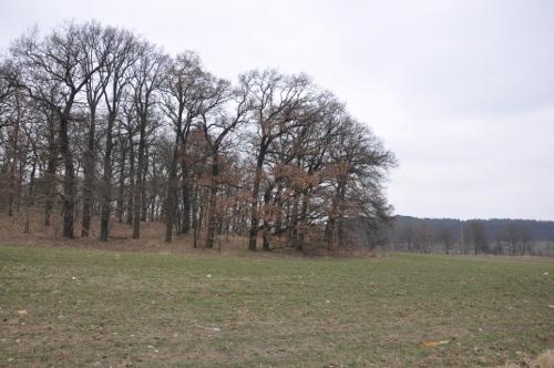 paisaje_cultivo_bosque_alemania_berlin