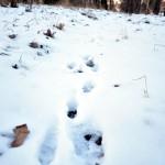 Fauna y Flora del Max Planck: Rastros en la nieve (I)