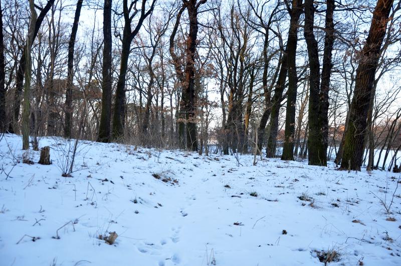 rastro-liebre-nieve