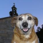 Cholo, de perro vagabundo a estrella de televisión