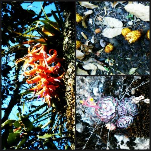 """Flores en el Parque Nacional """"El Chico"""""""