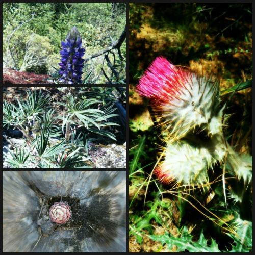 Flora Parque Nacional El Chico