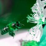 NO a los pesticidas que afectan a las abejas