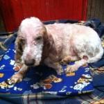 Actualización del estado de los perros maltratados de Rianxo