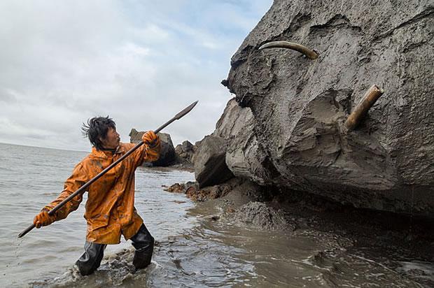 restos mamuts