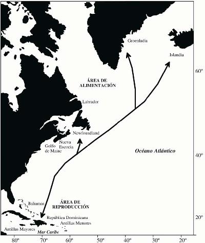 ballenas jorobadas samana