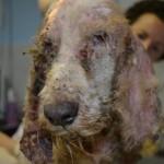 URGENTE! Vox Ánima necesita ayuda para 18 perros!