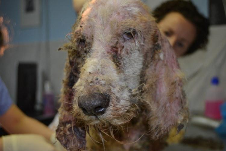 En Rianxo una familia tenían muchos animales maltratados