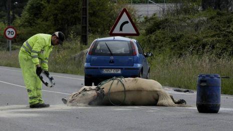 caballo atropellado