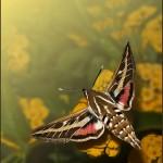 Criaturas aladas XII: La esfinge colibrí