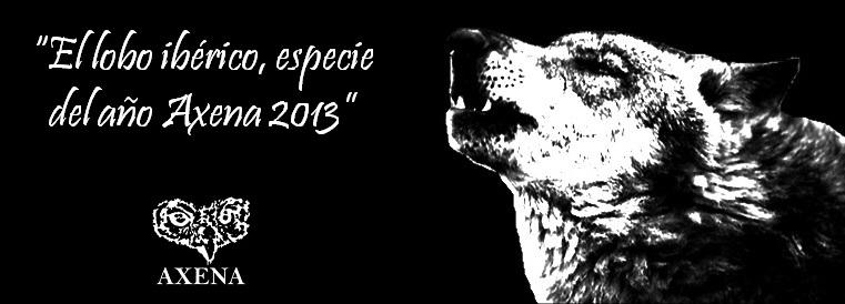 Lobo Ibérico, especie del año 2013