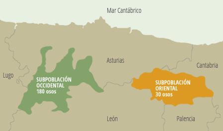 Oso Pardo Galicia