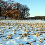 Fauna y flora del Max Planck (IV): La fría Alemania