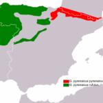 El desmán ibérico (Galemys pyrenaicus)