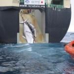 ¿Permitido cazar ballenas?