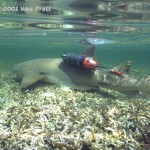 León marino ataca a pulpo (la crittercam de National Geographic)