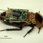 Insectos-cyborgs