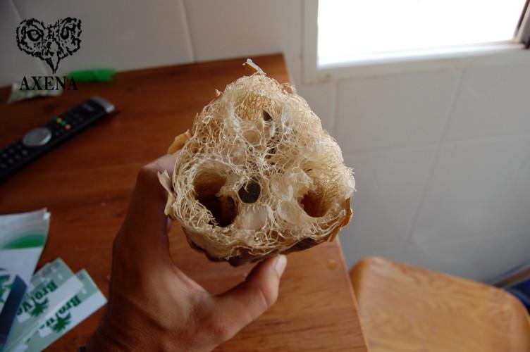 Una esponja natural