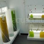 Acuicultura V – Cultivo de algas: microalgas