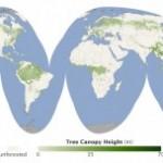 Medición de los bosques desde satélites