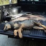 Asesinos de Lobos (XXX): El Circo de las Mentiras de la Xunta