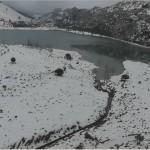 La Serra de Tramuntana helada (y sus plantas)