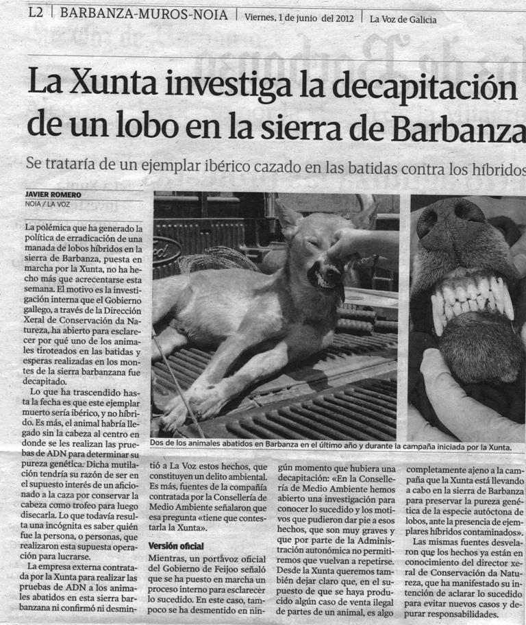 foto_xunta_investiga_decapitación_lobo