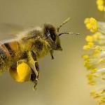 Protección a las abejas, catalizadores imprescindibles