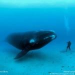 Brian Skerry: leyenda de la fotografía submarina