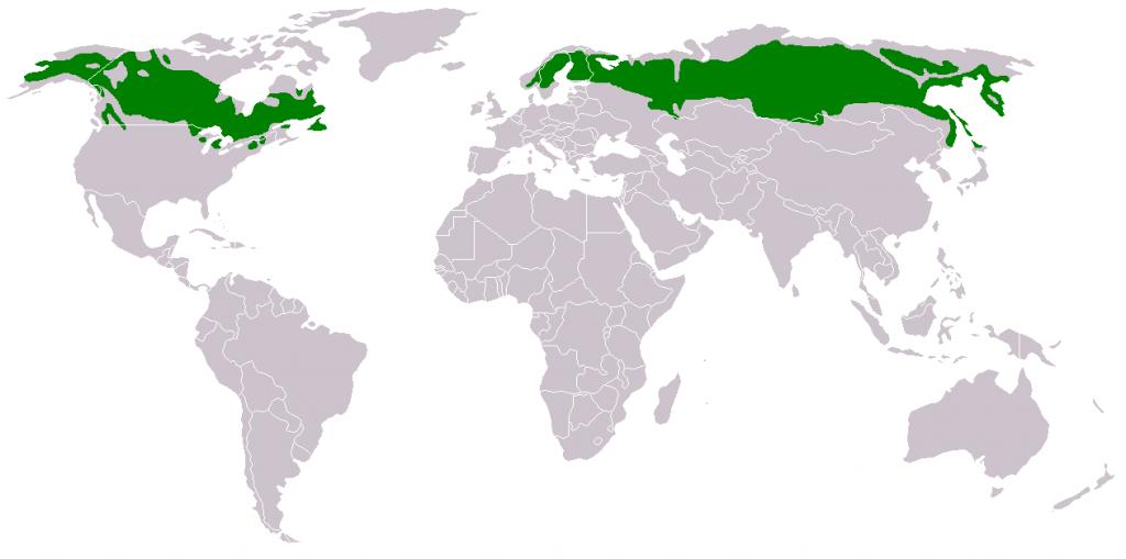 Distribución territorial de la taiga