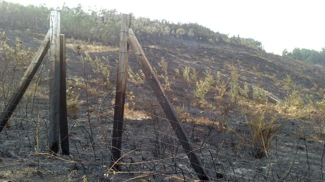 Parcela incendiada Porto do Son