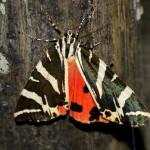 Criaturas aladas XV: El valle de las mariposas