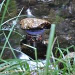Croac-duino, un proyecto abierto para el censo de anfibios