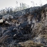 ¿Hay vida tras los incendios? (I)