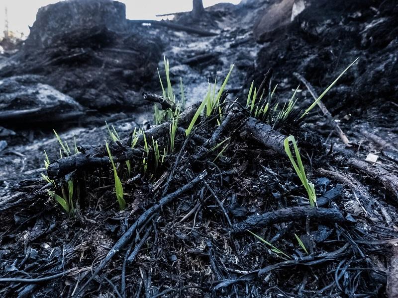 A pesar del devastador incendio, la vida sigue adelante, lucha por continuar