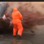 Abriendo la barriga de un cachalote muerto… pasa lo que pasa…