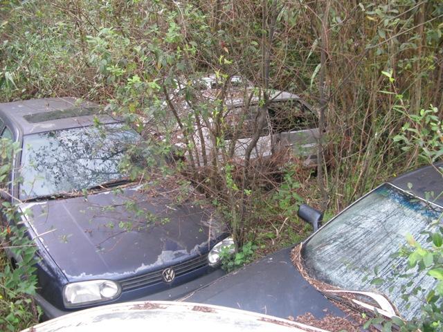 La maleza cubre los coche y de esta manera oculta la dejadez de las autoridades