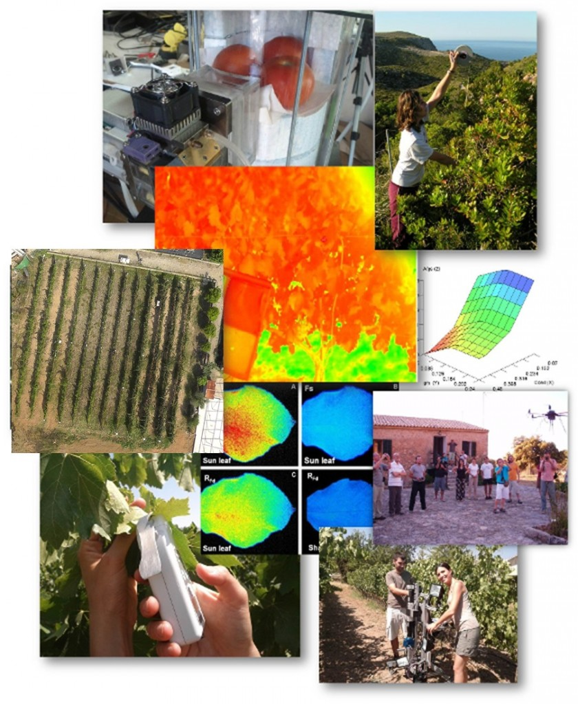 techniques_in_plant_ecophysiology2