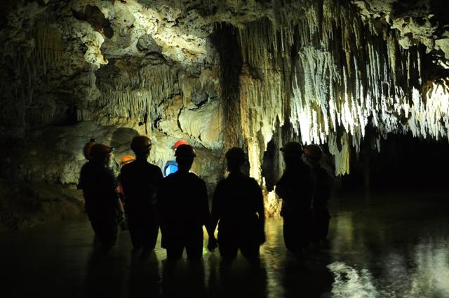 Las raíces de los arboles perforan en busca del agua de la cueva