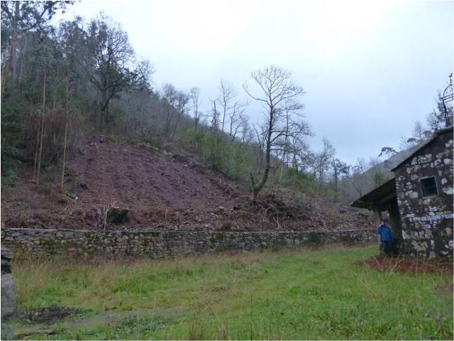 El paisaje es muy diferente después de la tala