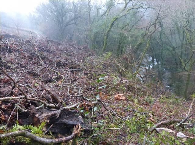 La tala de la ribera destruyó otras especies protegidas
