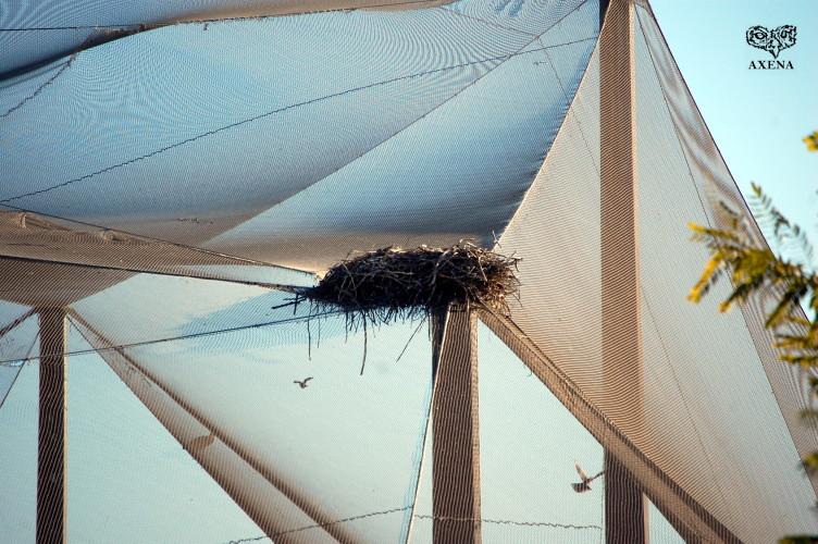 Detalle nido cigüeña