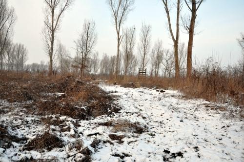 apostadero_cazadores_alemania_nieve