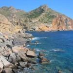 "El bosque protector: ""El ciprés de Cartagena"""