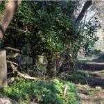 La protección del Parque natural de Corrubedo en entredicho