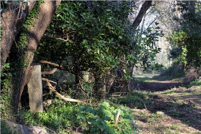 En los caminos del Parque nos  encontramos varios lazos