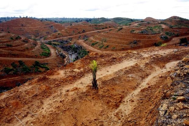 Plantacion palma Indonesia