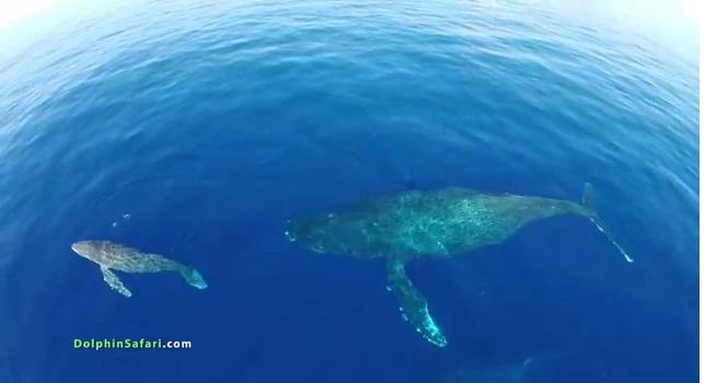 Drones ballenas