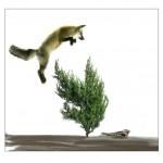 Plantas guardaespaldas: una eficiente barrera entre depredadores y presas