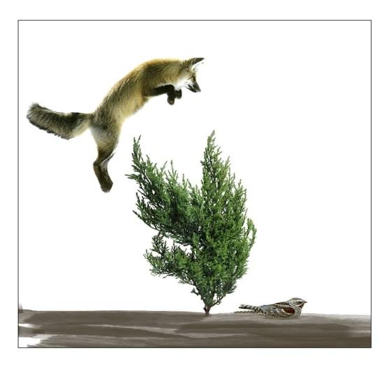 Visión esquemática del sistema de estudio, mostrando la forma habitual de ataque del zorro, obligado a sortear la vegetación que protege al chotacabras y ofreciendo a éste la oportunidad de escapar.